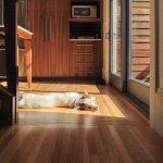 pies leżący na parkiecie z drewna